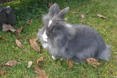 Our dwarf rabbits
