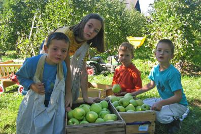 The kids are helping with the apple harvest