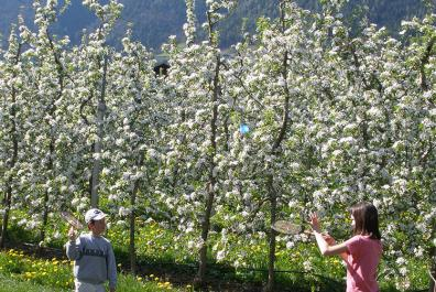 Playing badminton in the blooming orchards