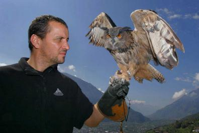Flight demonstrations with birds of prey and owls