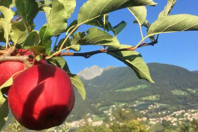 Apple orchards around the Rimmele-Hof